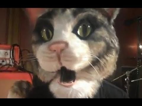 """Taking Back Sunday – Faith (When I Let You Down) OMGWTFTBS Cat [Official Music Video]"""