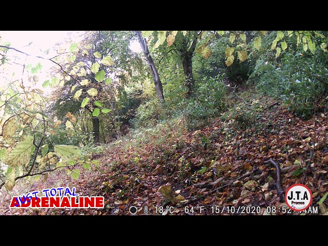 Grey Squirrel near Hawick - HD Wildlife Camera Raw Footage - by JTAPromos - www.JTAPromos.net