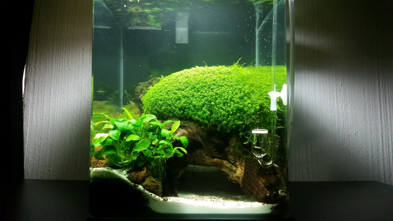 Nano Cube Aquascape - YouTube