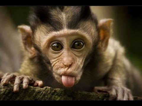 Thumbnail: Funny monkeys will make you laugh hard - Funny and cute compilation - Must watch!