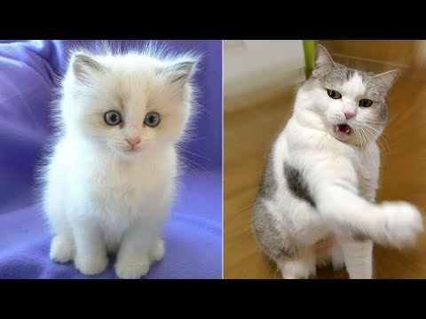 Funny Cat and Cute Kittens Videos Compilation #7