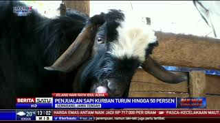 Jelang Idul Adha, Penjualan Sapi di Semarang Sepi