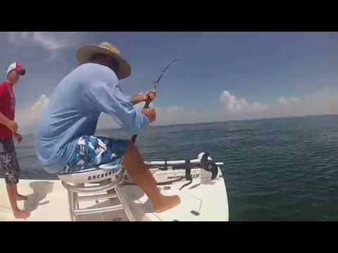 Father And Son Battle Goliath Grouper In Boca Grande Florida - Get Pulled Out Of Chair