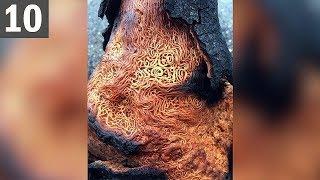 Spaghetti Tree? 10 Most Weird Trees