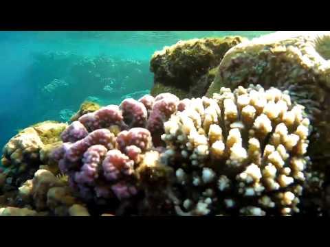 Sharm EL Sheikh, Monte Carlo Resort & SPA, Tiran diving, Color canyon, Dahab Blue Hole