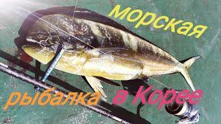 Морская рыбалка у берегов Южной Кореи Корифена амберджек рыба сабля и луциан