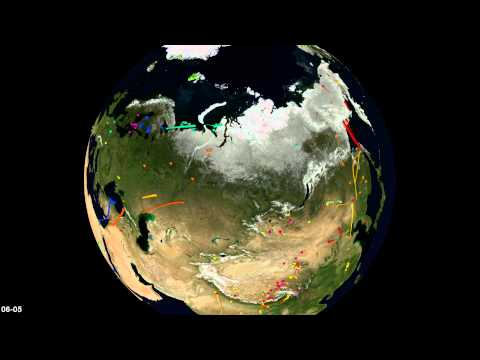 Bird migrations in Movebank: Eurasia