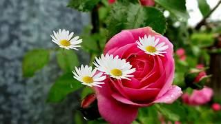 Цветы это жизнь Красота Цветы это любовь Красивые музыкальные видео открытки
