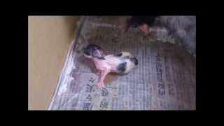 Новорожденные котята Baby cat Newborn
