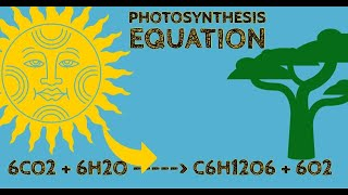 GOHSTEM ~ #36 SCIENCE MTEL 10 Practice Test ~ Photosynthesis Equation ~ GOHACADEMY.COM