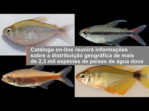 Catálogo on-line reunirá informações de 2,3 mil espécies de peixes de água doce