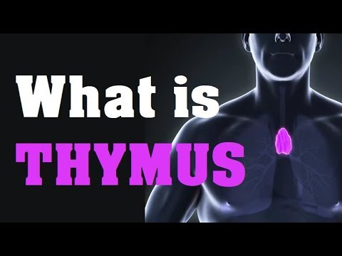 What is the THYMUS GLAND function and location - YouTube