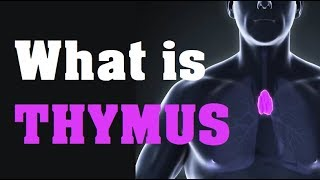 What is the THYMUS GLAND function and location