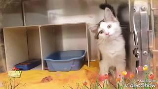 Cat Adoption Room Walk Thru 6-22-17