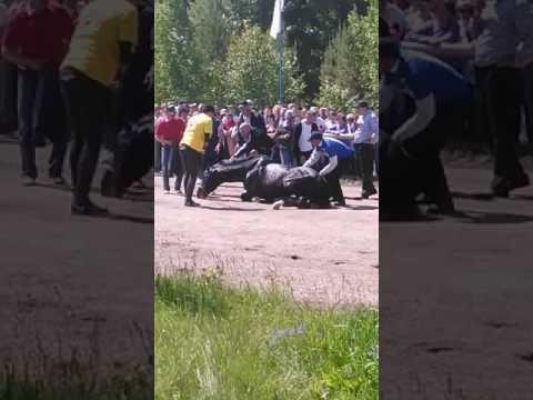 Мелеуз.Сабантуй.Лошадь упала на скачках,затем поднялась,под аплодисменты!!!!