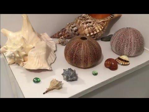 How To Clean SeaShells - آموزش تمیز کردن و رنگ آمیزی صدف