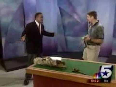 lizard jumps on newscaster