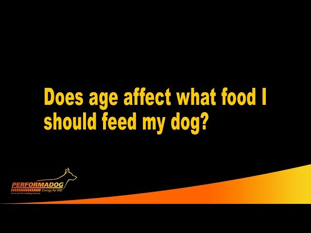 Does age affect what food I should feed my dog?