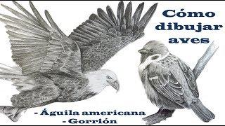 Cómo dibujar Aves | Cómo dibujar un águila | Cómo dibujar un pájaro