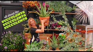 All About Succulents | Care, Containers, Duplicating, Cuttings, Potting Up, Mealy Bugs //Garden Farm