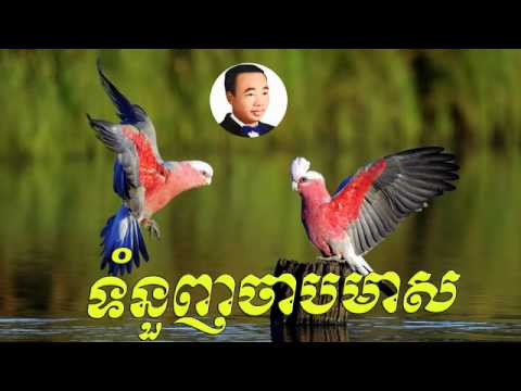 tom nounh chab meas - ទំនួញចាបមាស   -   sin sisamuth |Sin sisamuth old song |Sin sisamuth song