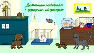 Домашние животные в городских квартирах. Обучающее видео для детей.