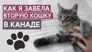 Вторая кошка - как завести кошку в Торонто [ВЛОГ]