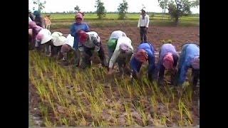 衝撃 - 面白 - バッタンバン州の#33で農家カンボジア