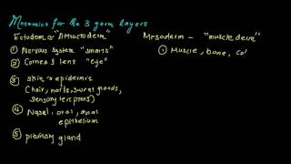 How to memorize the 3 germ layers: mnemonics