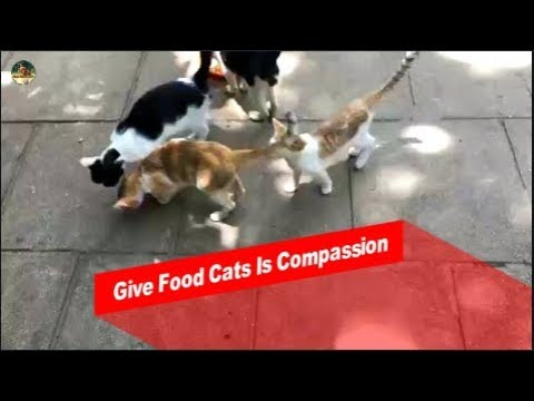 To Making Cats | Gave Food The Cats  | The smart team matting summer 2019