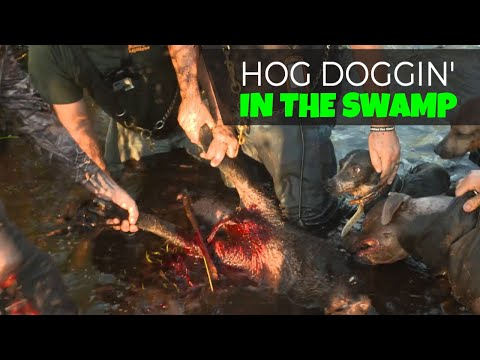 extended-cut:-dogs-on-hogs-in-florida