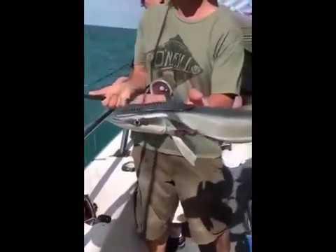 Удивительная рыба магнит