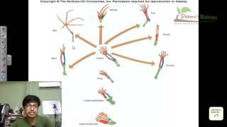 Convergent evolution and divergent evolution vs parallel evolution