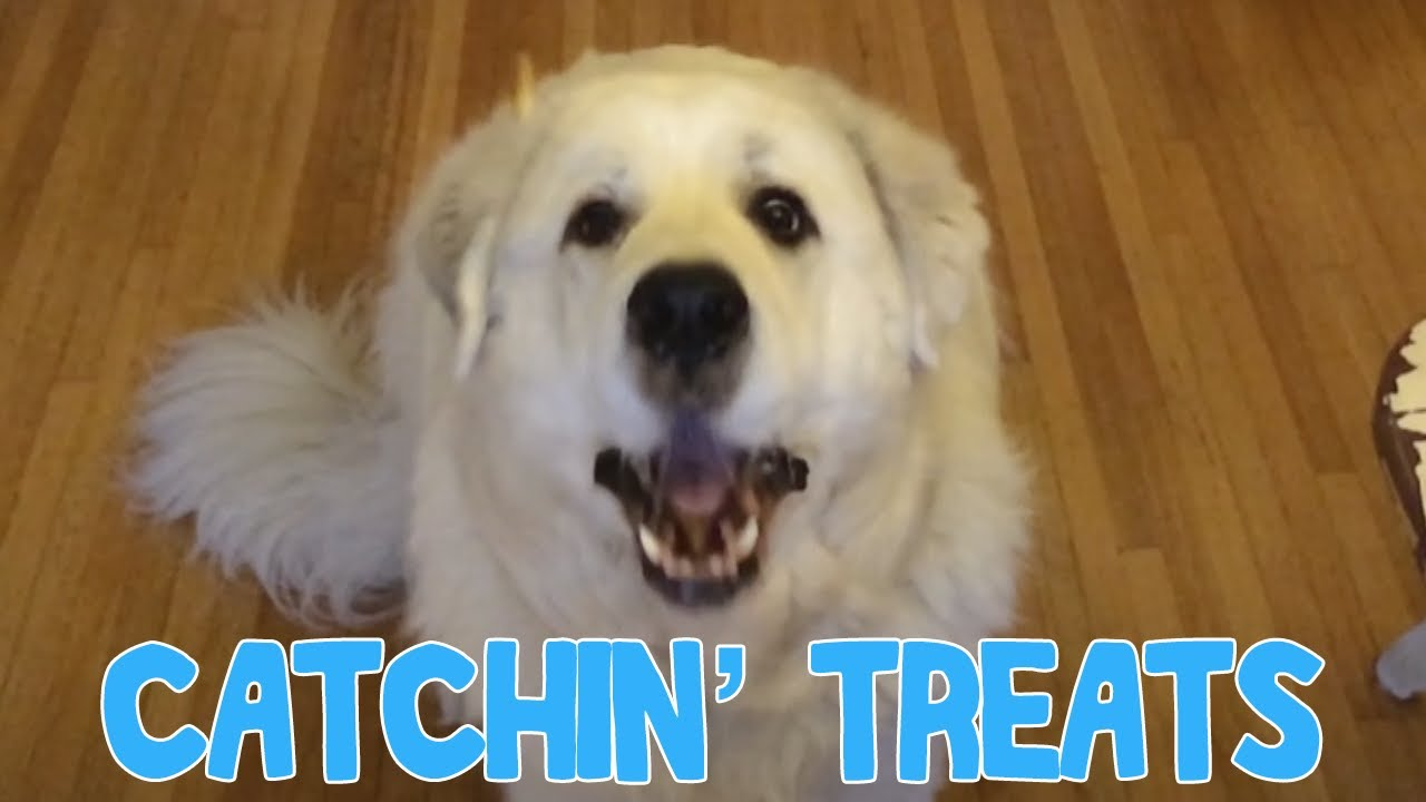 Photos of dogs catching treats video