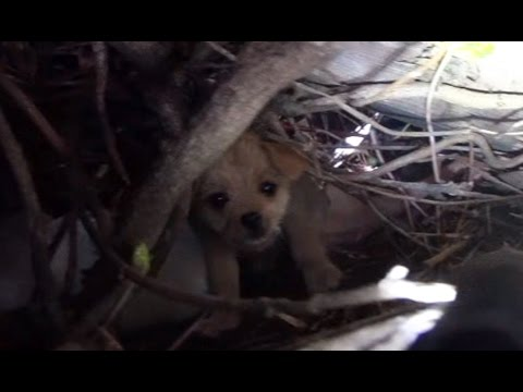 Thumbnail: Saving five orphaned puppies - watch until the end for an amazing transformation!