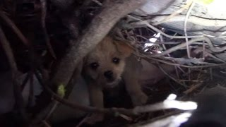 Saving five orphaned puppies - watch until the end for an amazing transformation!