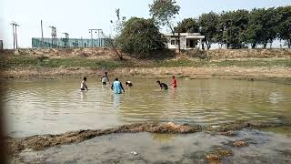 || Fishing By Hand || Indian village Activities,|| Best Video Of Day || No.(5)