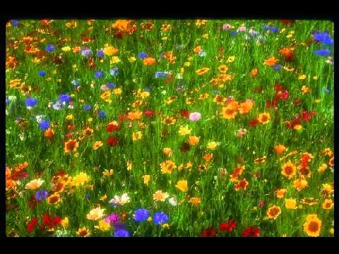 Peter Davison - Garden (Meditate)
