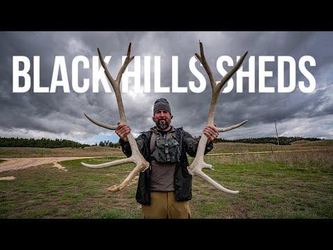#elk #elkshedhunting #blackhills   Elk Shed Hunting In The Black Hills