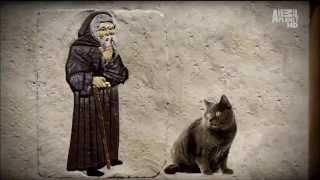 О кошках Шартрез www catbay ru Chartreux