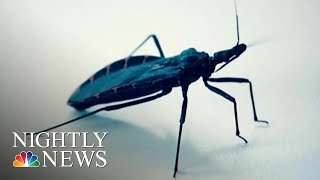 Health Officials Warn Deadly Kissing Bugs Spreading North In U.s. | Nbc Nightly News