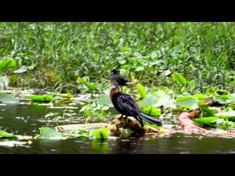 Florida Beautiful Nature - St. Jones River Tour at Blue Spring October 2015