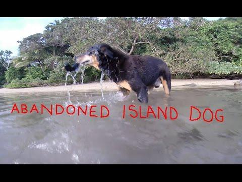 MOOSE THE ABANDONED ISLAND DOG Sequel 1