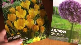 Черная лилия ❀ черные тюльпаны ❀ обзор посылки луковичных цветов(, 2016-09-29T22:38:54.000Z)