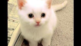 Tingkah kucing yang gemesin bikin ketawa lepas