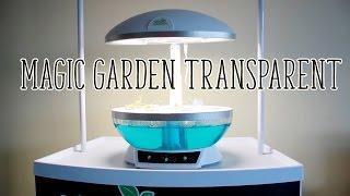 Обзор гидропонной установки Magic Garden Transparent