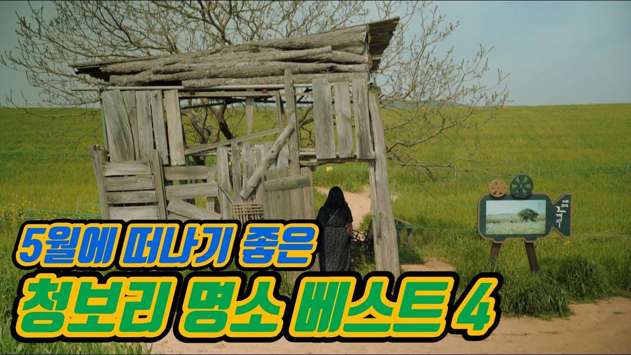 [5월 가볼만한곳] 초록 물결이 장관인 청보리 명소 베스트4 | 5월 추천여행지