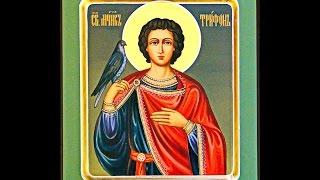 14 февраля   Страдание святого мученика Трифона 1 февраля ст ст . Igla
