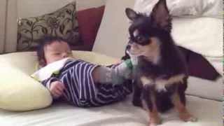 無邪気に足バタバタしてる赤ちゃんの側に寄り添い、キックに耐えてます。