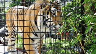 Zoos: Fun & Educational or Terrible Pla...